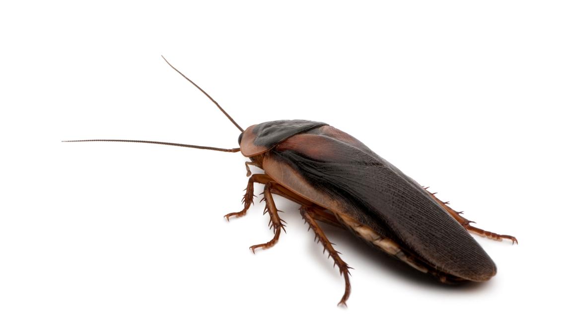 Control de cucarachas Almeria