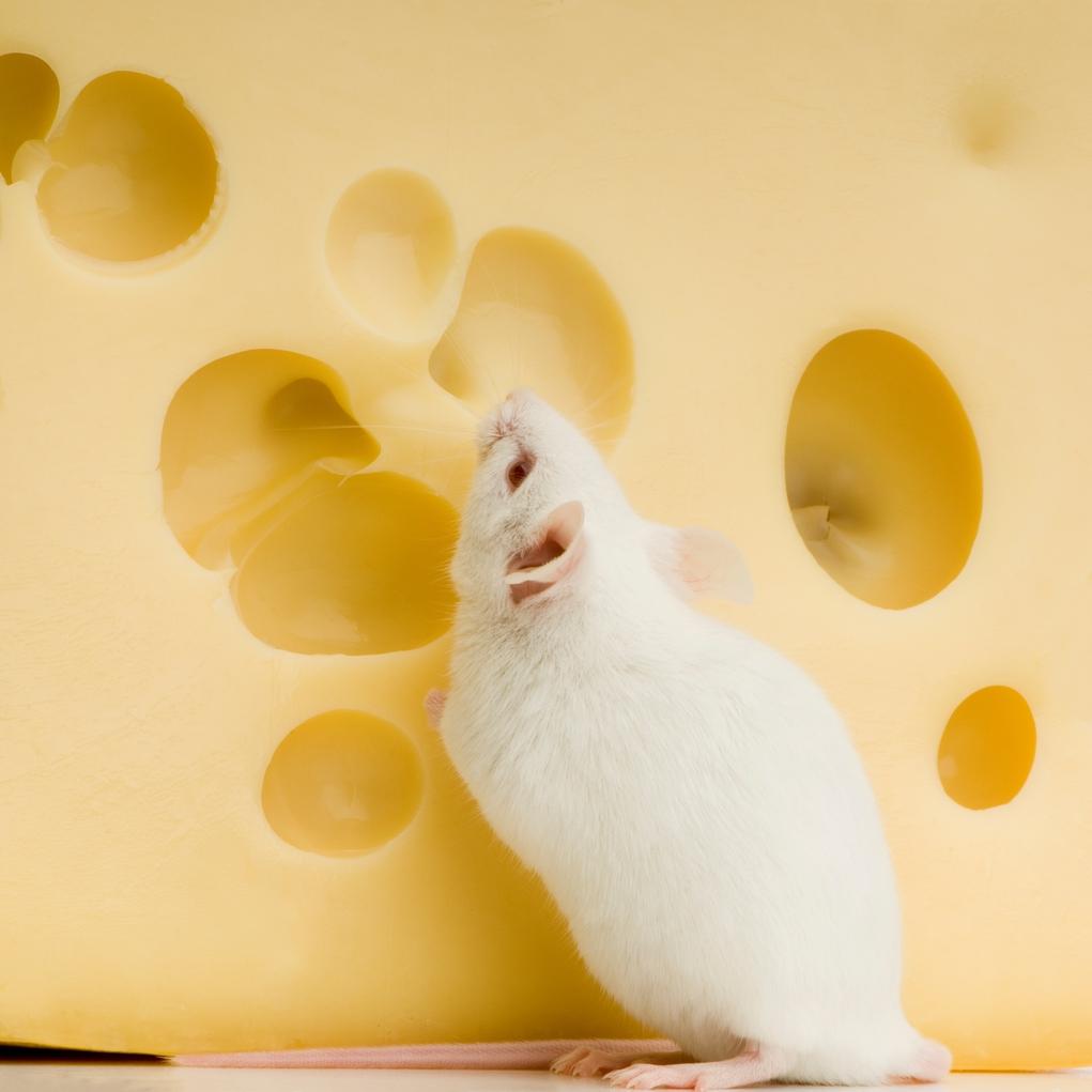 Contol de plagas de ratas Almeria