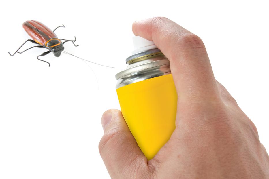 Eliminar plagas de cucarachas Almeria