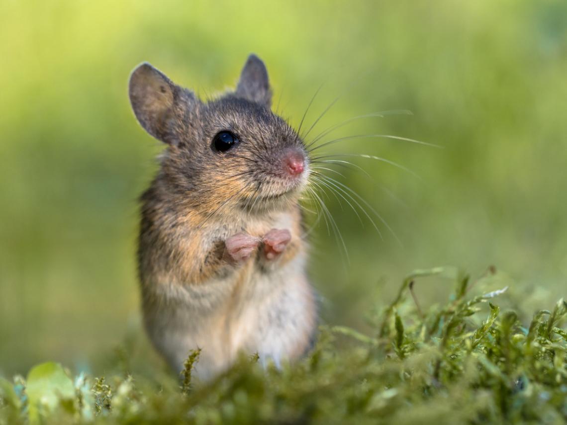 ¿Quieres saber más sobre los ratones?