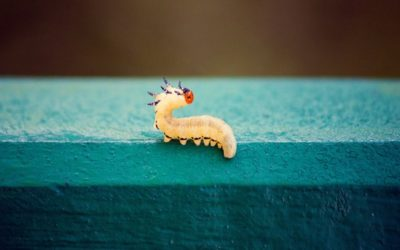 ¿Cómo eliminar plaga de gusanos y superar su visita?