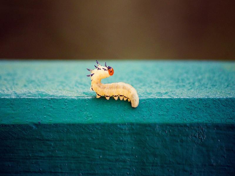 Cómo eliminar plaga de gusano