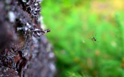 Picaduras de arañas comunes. ¿Cómo saber si te ha picado?